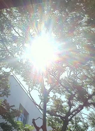 Light shining through tree, Austria